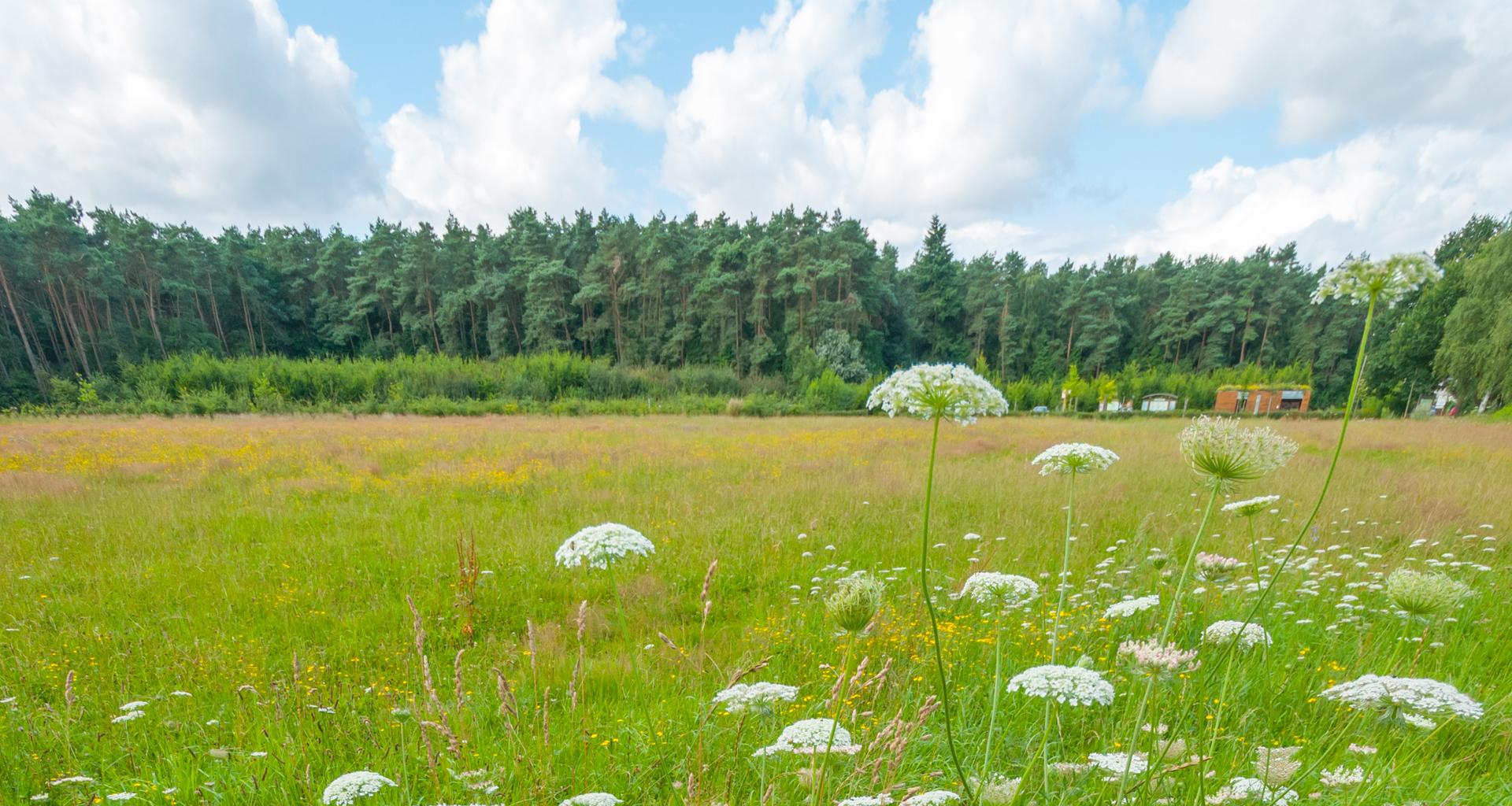 Oproep investeringssubsidies natuur 2016 natura2000 - Foto van de eetkamer ...