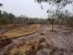 (foto (c) Bosgroep Kempen Noord)