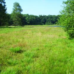 Droog heischraal grasland te Grotenhout (Lille)