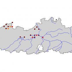 Verspreidingskaart Visdief. Kaart afkomstig van de atlas van de Vlaamse broedvogels van 2000 - 2002.