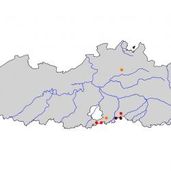 Verspreidingskaart Middelste bonte specht. Kaart afkomstig van de atlas van de Vlaamse broedvogels van 2000 - 2002.