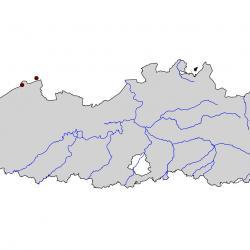 Verspreidingskaart Grote stern. Kaart afkomstig van de atlas van de Vlaamse broedvogels van 2000-2002.