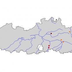 Verspreidingskaart Grauwe klauwier. Kaart afkomstig van de atlas van de Vlaamse broedvogels van 2000 - 2002.