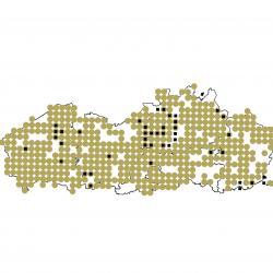 Verspreidingskaart (2007), Gewone dwergvleermuis