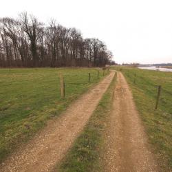 Kraaibosje te Leut, langs de Grensmaas.