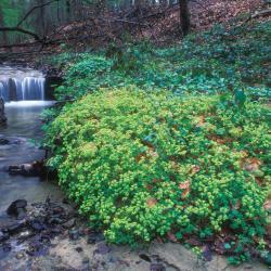 Bronbosvegetaties zijn beperkt tot de directe omgeving van bronnen en bronbeekjes (Verrebeek in de Everbeekse bossen).