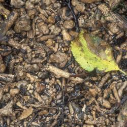 Detail kalkafzettingen op plantenresten.