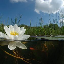 Waterplassen