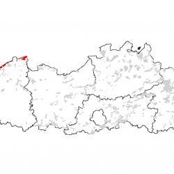 """Kaart van de speciale beschermingszones voor:  Wandelende duinen op de strandwal met Ammophila arenaria (""""witte duinen"""")"""