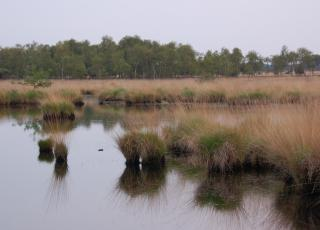 Kalmthoutse Heide (5) © An W.