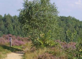 Mechelse Heide (1) © Marc De Vos