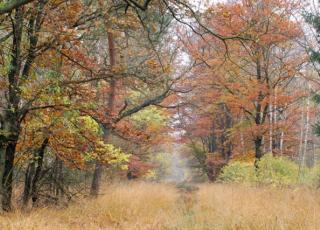 Bosreservaat Pietersembos