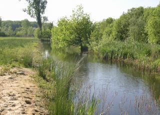 Poel in het natuurreservaat d'Heide in Wetteren met hoogste concentratie kamsalamanders
