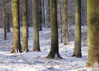 Zoniënwoud in de winter (c) Dirk Raes